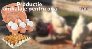 Productie ambalaje pentru oua 300x161 - Area4u