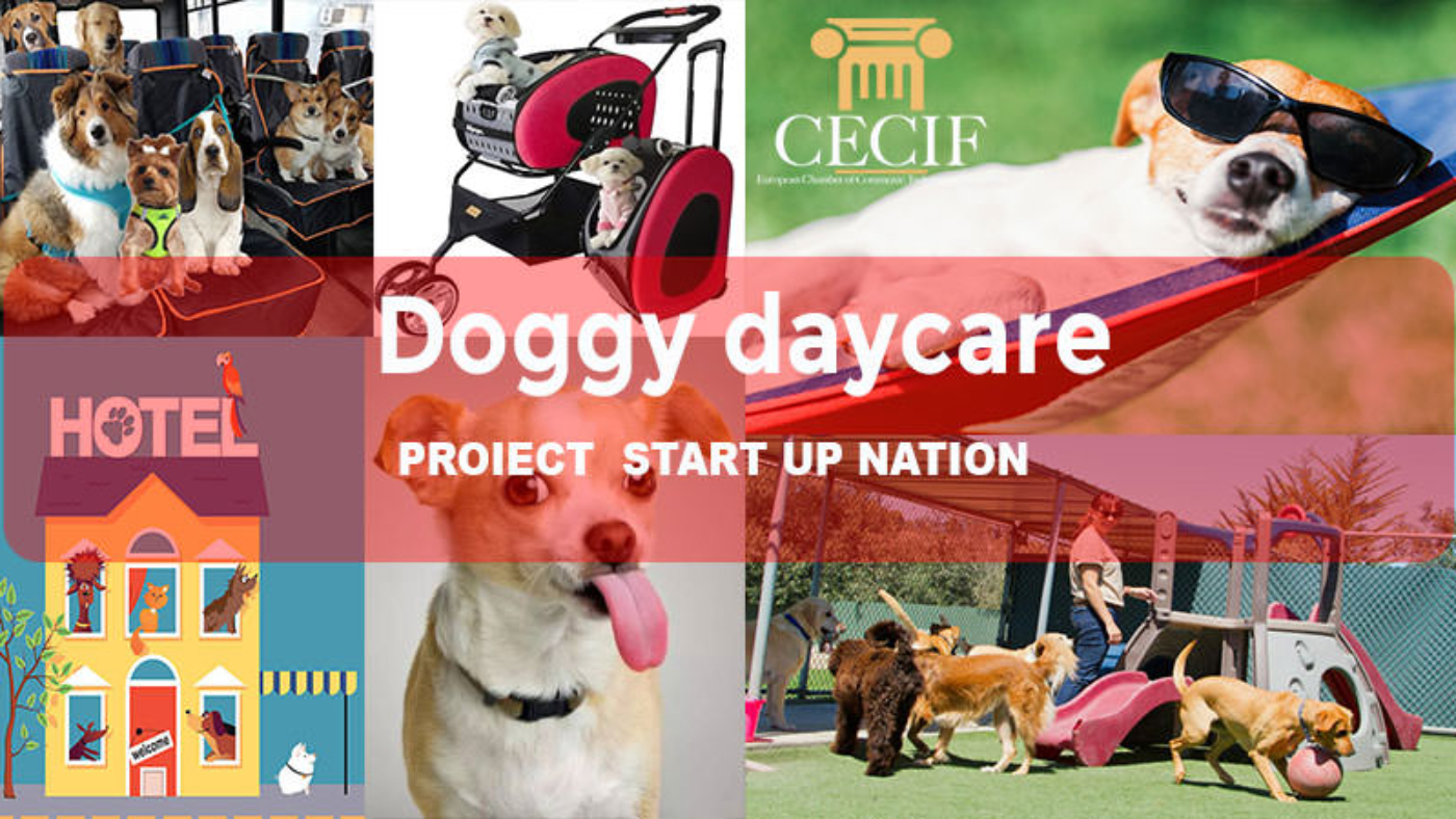 doggy daycare start up