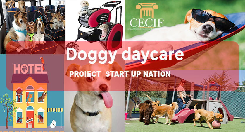 Doggy daycare proiect